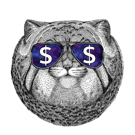 Wild cat Manul wearing glasses with dollar sign Illustration with wild animal for t-shirt, tattoo sketch, patch Stock Photo
