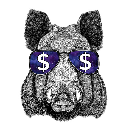 Aper, boar, hog, hog, wild boar wearing glasses with dollar sign Illustration with wild animal for t-shirt, tattoo sketch, patch Stock Illustration - 80729649