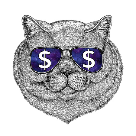 Brithish noble cat Male wearing glasses with dollar sign Illustration with wild animal for t-shirt, tattoo sketch, patch