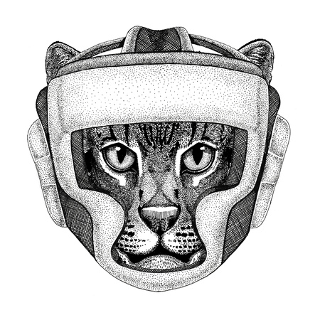 Wild cat Fishing cat Wild boxer Boxing animal Sport fitness illutration Wild animal wearing boxer helmet Boxing protection Image for t-shirt, poster, banner