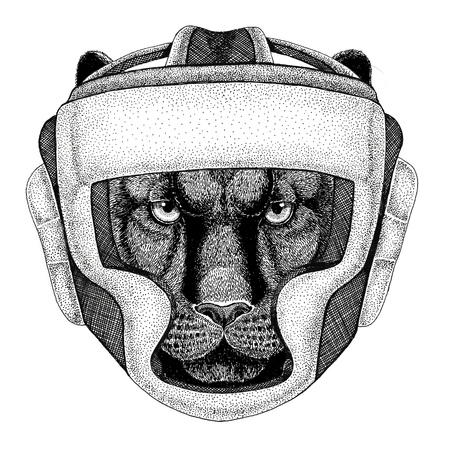 Pantera Puma Cougar Gatto selvatico Pugile selvaggio Boxing animale Sport fitness illutration Animale selvatico che indossa il casco boxer Protezione della boxe Immagine per t-shirt, poster, banner Archivio Fotografico - 80906650