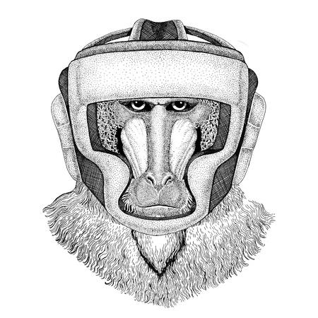 Scimmia, babbuino, cane-scimmia, scimmia Pugile selvaggio Boxing animal Sport illutration fitness Animale selvaggio indossando il casco pugile Protezione boxing Immagine per t-shirt, poster, banner Archivio Fotografico - 80906375
