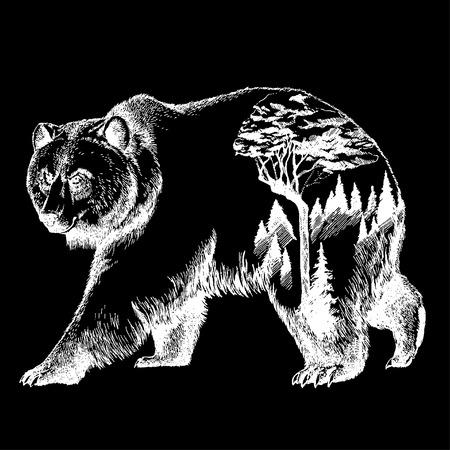 Vector oso arte de la exposición de doble exposición. Canadá. Montañas, brújula. Oso pardo Oso grizzly silueta camiseta diseño Turismo símbolo, aventura, gran al aire libre. Foto de archivo - 80901165