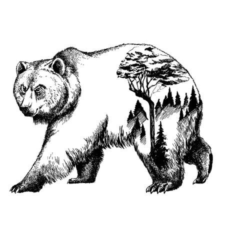 벡터 곰 두 번 노출 문신 예술. 캐나다. 산, 나침반. 브라운 베어 곰 회색 실루엣 t- 셔츠 디자인 관광 기호, 모험, 멋진 야외입니다. 스톡 콘텐츠 - 80901187