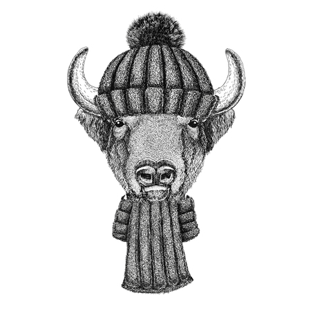 Buffalo, bison,ox, bull wearing knitted hat and scarf