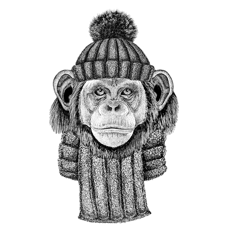 니트 모자와 스카프 착용 침팬지 원숭이