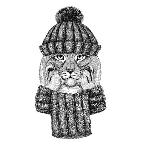 Wild cat Lynx Bobcat Trot wearing knitted hat and scarf Stock Photo