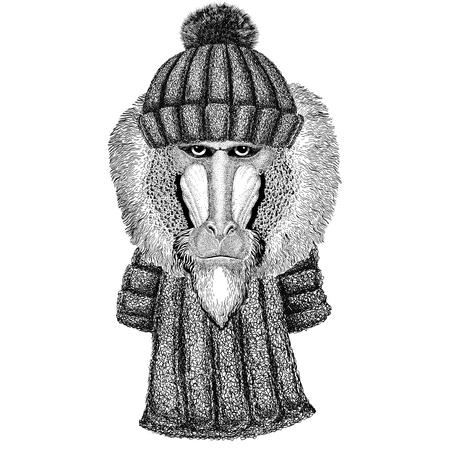 Aap, baviaan, hond-aap, aap dragen gebreide muts en sjaal