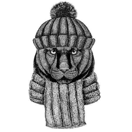 ニットの帽子とスカーフを身に着けているヒョウ ピューマ クーガー野生の猫