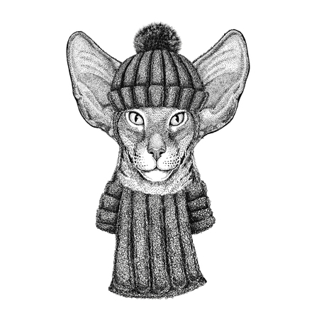 nobleness: Oriental cat with big ears wearing knitted hat and scarf