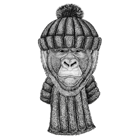 Gorilla, monkey, ape Frightful animal wearing knitted hat and scarf