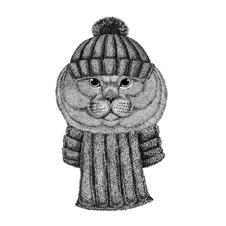 Brithish noble cat Male wearing knitted hat and scarf