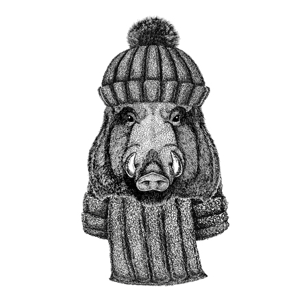 Aper, boar, hog, hog, wild boar wearing knitted hat and scarf
