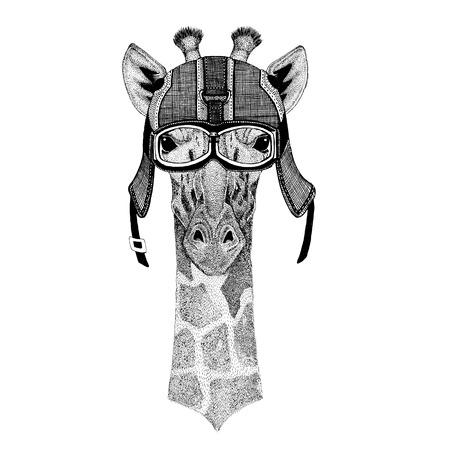 Camelopard, giraffe wearing motorcycle helmet, aviator helmet Illustration for t-shirt, patch, logo, badge, emblem, logotype Biker t-shirt with wild animal