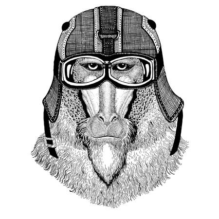 Monkey, baboon, dog-ape, ape wearing motorcycle helmet, aviator helmet Illustration for t-shirt, patch, logo, badge, emblem, logotype Biker t-shirt with wild animal