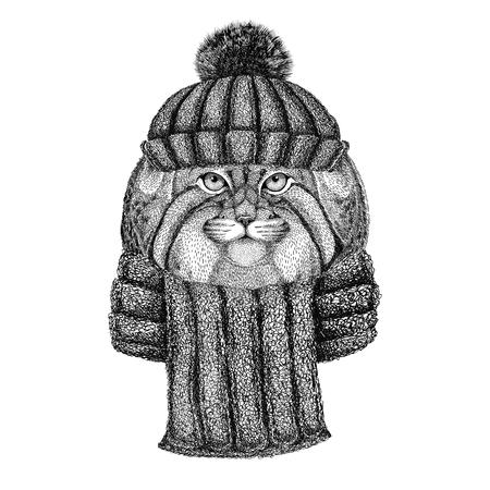 野生の猫マヌルネコを着てニット帽子・ スカーフ