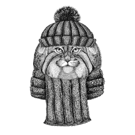 Wild cat Manul wearing knitted hat and scarf
