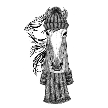 Horse, hoss, knight, steed, courser wearing knitted hat and scarf Фото со стока