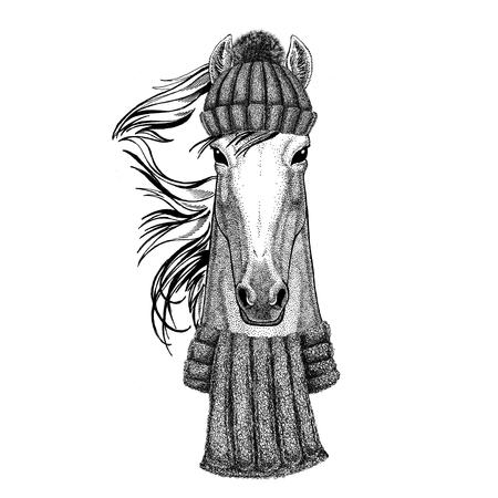 Paard, hoss, ridder, ros, courser dragen gebreide muts en sjaal