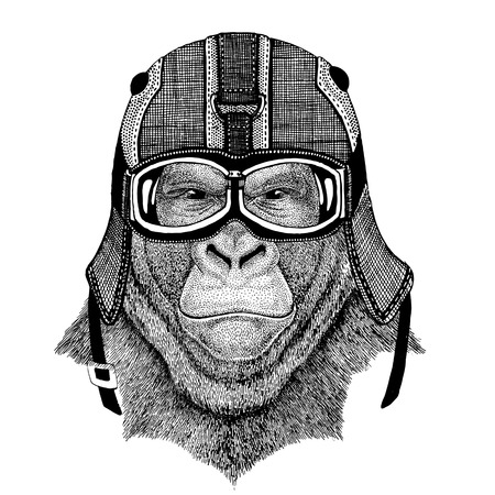 Gorilla, monkey, ape Frightful animal wearing motorcycle helmet, aviator helmet Illustration for t-shirt, patch, logo, badge, emblem, logotype Biker t-shirt with wild animal