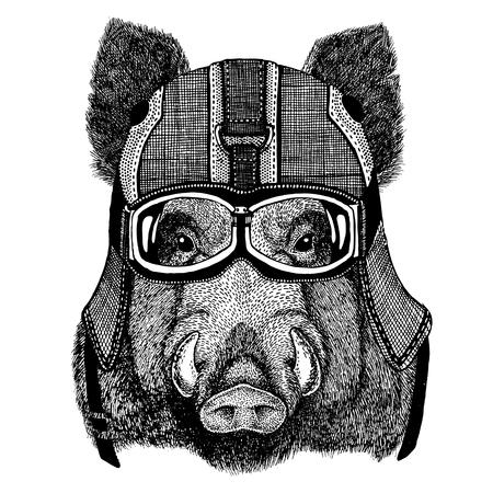 Aper, boar, hog, hog, wild boar wearing motorcycle helmet, aviator helmet Illustration for t-shirt, patch, logo, badge, emblem, logotype Biker t-shirt with wild animal