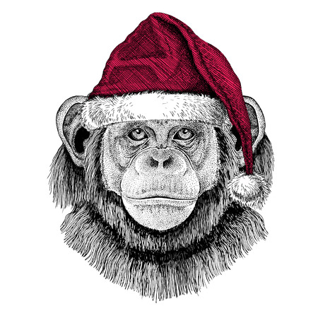 Chimpanzee Monkey Christmas illustration Wild animal wearing christmas santa claus hat Red winter hat Holiday picture Happy new year Stock Photo