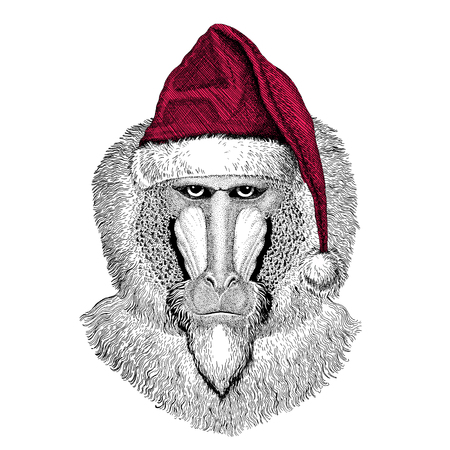 Monkey, baboon, dog-ape, ape Christmas illustration Wild animal wearing christmas santa claus hat Red winter hat Holiday picture Happy new year Stock Photo