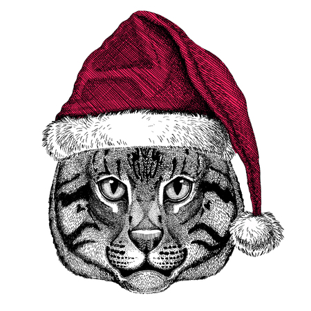 silueta de gato: Christmas illustration Wild animal wearing christmas santa claus hat Red winter hat Holiday picture Happy new year Foto de archivo