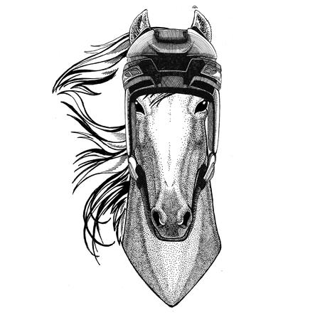 Horse, hoss, knight, steed, courser Hockey image Wild animal wearing hockey helmet Sport animal Winter sport Hockey sport