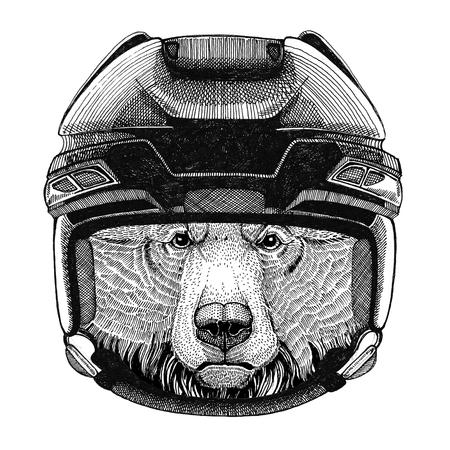 Grizzly bear Big wild bear Hockey image Wild animal wearing hockey helmet Sport animal Winter sport Hockey sport