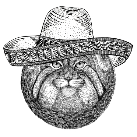 Wild cat Manul Wild animal wearing sombrero Mexico Fiesta Mexican party illustration Wild west