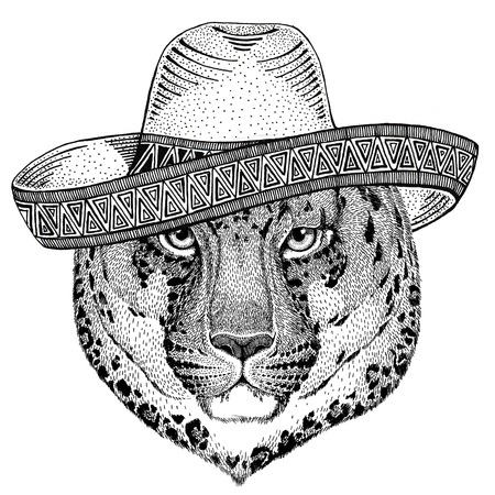 Wild cat Leopard Cat-o-mountain Panther Wild animal wearing sombrero Mexico Fiesta Mexican party illustration Wild west