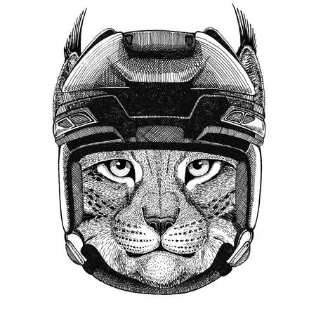 ホッケー ヘルメット スポーツ動物冬スポーツ ホッケー スポーツを身に着けている野生の猫 Lynx ボブキャット トロット ホッケー イメージ野生動物