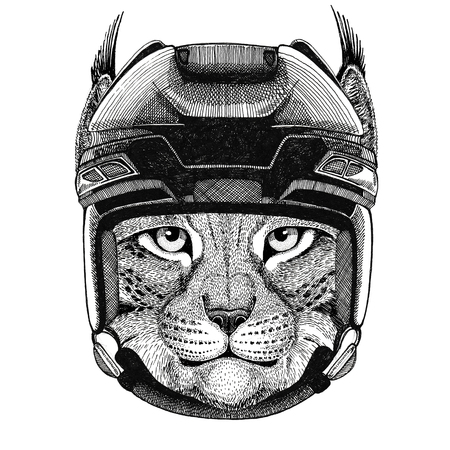 Wild cat Lynx Bobcat Trot Hockey image Wild animal wearing hockey helmet Sport animal Winter sport Hockey sport Stock Photo