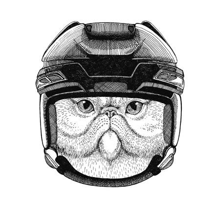 Portret van fluffy Perzische kat Hockey afbeelding Wild dier draagt hockey helm Sport dier Winter sport Hockey sport Stockfoto - 82005063