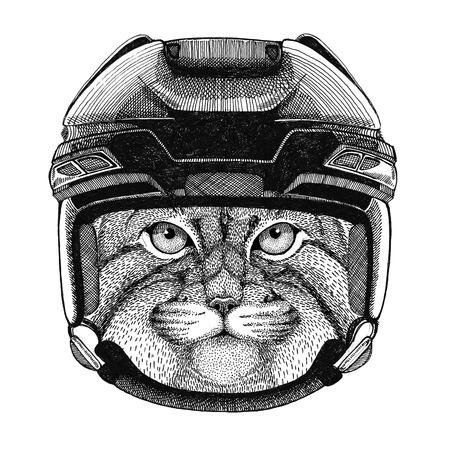 Wild cat Manul Hockey image Wild animal wearing hockey helmet Sport animal Winter sport Hockey sport Stok Fotoğraf