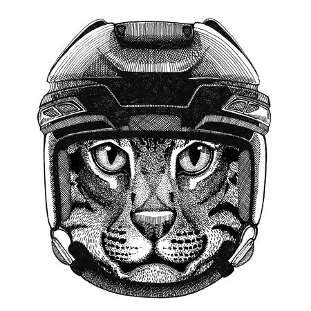 Wild cat Fishing cat Hockey image Wild animal wearing hockey helmet Sport animal Winter sport Hockey sport Stock Photo