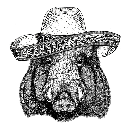 Aper, boar, hog, hog, wild boar Wild animal wearing sombrero Mexico Fiesta Mexican party illustration Wild west