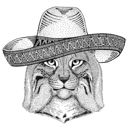 野生の猫 Lynx ボブキャット トロット野生動物身に着けているソンブレロ メキシコ フィエスタ メキシコ パーティー野生の西の図 写真素材