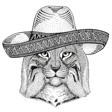 Wild cat Lynx Bobcat Trot Wild animal wearing sombrero Mexico Fiesta Mexican party illustration Wild west Reklamní fotografie - 82005151