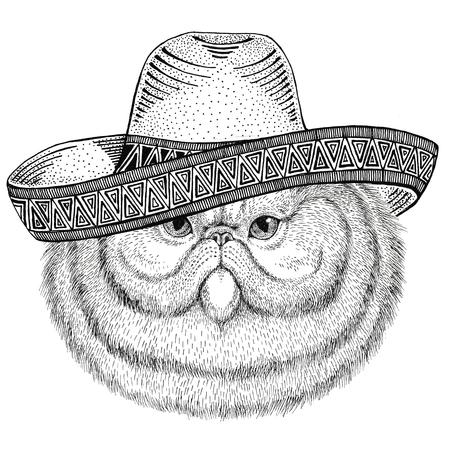 솜 털 persian 고양이의 초상화 챙 넓은 모자를 착용하는 야생 동물 멕시코 축제 그림 멕시코 와일드 웨스트