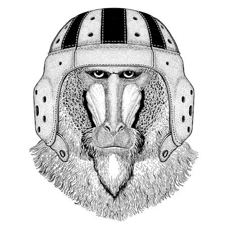 Monkey, baboon, dog-ape, ape Wild animal wearing rugby helmet Sport illustration