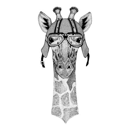 Camelopard, giraffe wearing biker helmet Animal with motorcycle leather helmet Vintage helmet for bikers Aviator helmet Banco de Imagens