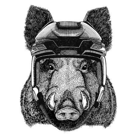 Aper, boar, hog, hog, wild boar Hockey image Wild animal wearing hockey helmet Sport animal Winter sport Hockey sport