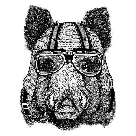 Aper, boar, hog, hog, wild boar wearing biker helmet Animal with motorcycle leather helmet Vintage helmet for bikers Aviator helmet