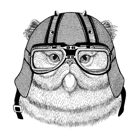 바이 커 헬멧을 착용하는 솜 털 페르시아 고양이의 초상화 오토바이 가죽 헬멧과 동물 자전거 헬멧 빈티지 헬멧 비행가 헬멧 스톡 콘텐츠