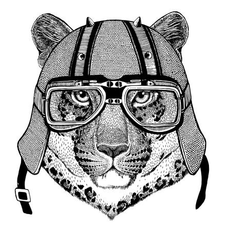 Wild cat Leopard Cat-o-mountain Panther wearing biker helmet Animal with motorcycle leather helmet Vintage helmet for bikers Aviator helmet Stock Photo