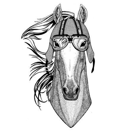 Horse, hoss, knight, steed, courser wearing biker helmet Animal with motorcycle leather helmet Vintage helmet for bikers Aviator helmet