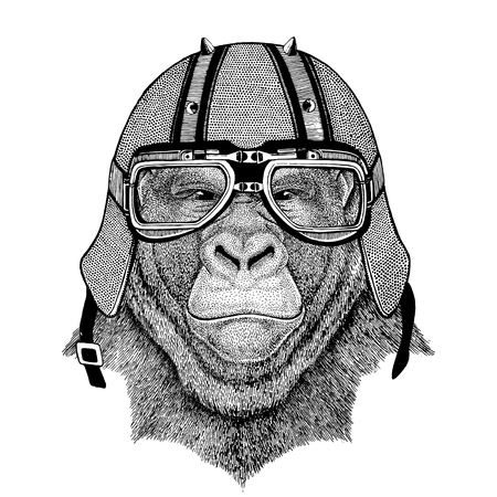 Gorilla, monkey, ape Frightful animal wearing biker helmet Animal with motorcycle leather helmet Vintage helmet for bikers Aviator helmet Banco de Imagens