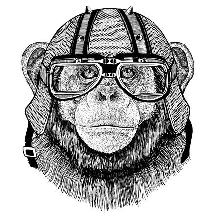 Chimpanzee Monkey wearing biker helmet Animal with motorcycle leather helmet Vintage helmet for bikers Aviator helmet Stock Photo